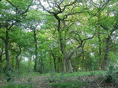 http://www.eakringbirds.com/eakringbirds3/sherwoodforest.jpg
